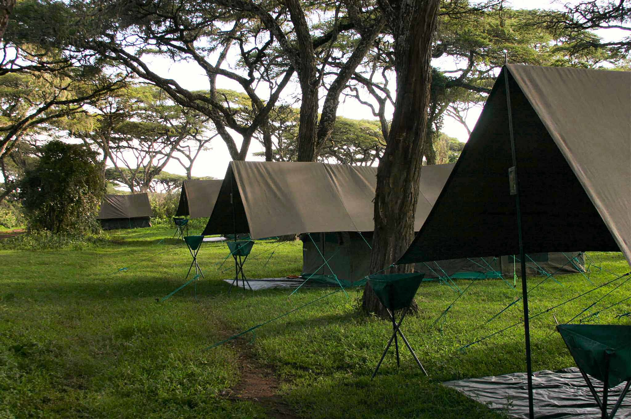 Forest tent camp on Ngorongoro Crater rim