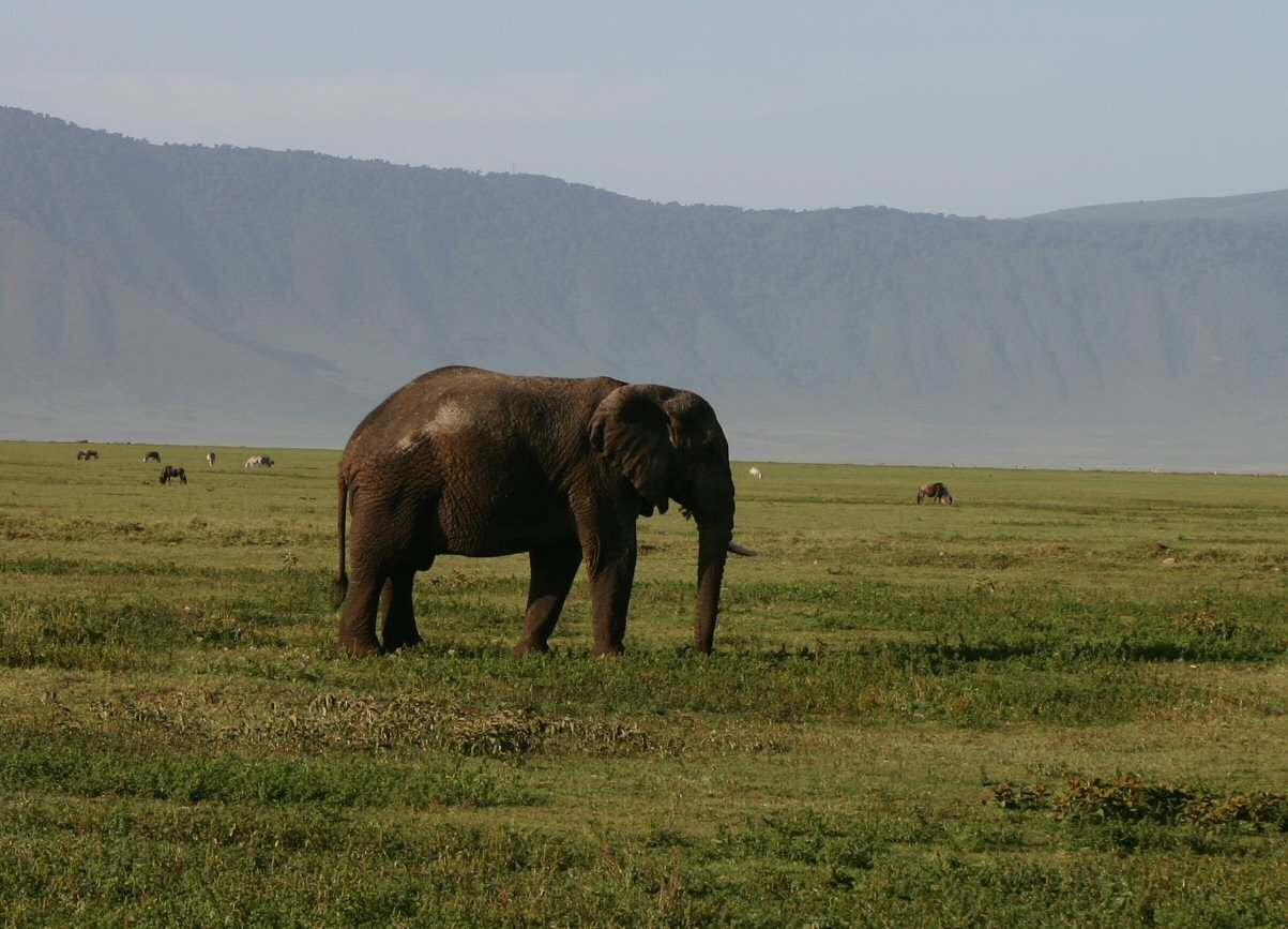 Artsy photograph of an elephant with the Ngorongoro Crater rim in the background